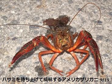 f:id:mikawakinta63:20130917191434j:image:left