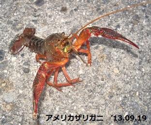 f:id:mikawakinta63:20130917191553j:image:right