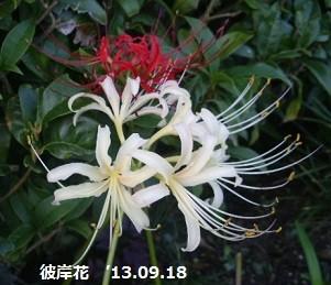 f:id:mikawakinta63:20130917193419j:image:right