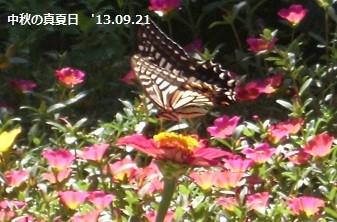 f:id:mikawakinta63:20130920234059j:image:left