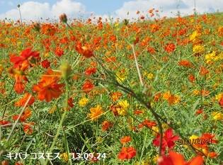f:id:mikawakinta63:20130924133841j:image:left