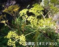 f:id:mikawakinta63:20130928002358j:image