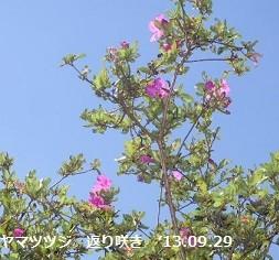 f:id:mikawakinta63:20130928002553j:image:right