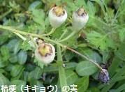 f:id:mikawakinta63:20130928003036j:image