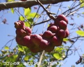 f:id:mikawakinta63:20130928005100j:image:left