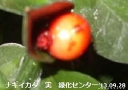 f:id:mikawakinta63:20130928011235j:image:right