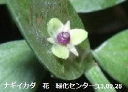 f:id:mikawakinta63:20130928011316j:image:left