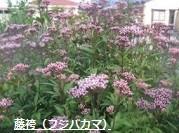 f:id:mikawakinta63:20130930132706j:image
