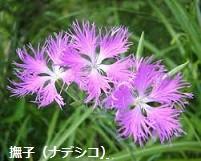 f:id:mikawakinta63:20130930141725j:image