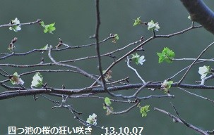 f:id:mikawakinta63:20131006142109j:image:right