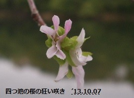 f:id:mikawakinta63:20131006221616j:image:left