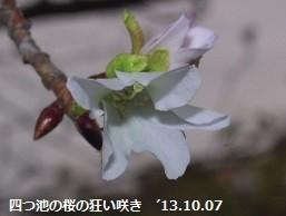f:id:mikawakinta63:20131006221815j:image:left