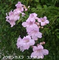 f:id:mikawakinta63:20131011194643j:image:right