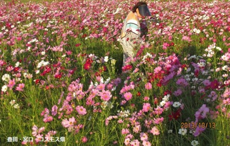 f:id:mikawakinta63:20131013063555j:image