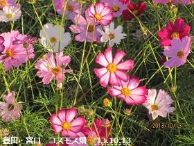 f:id:mikawakinta63:20131013064030j:image:right