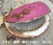 f:id:mikawakinta63:20131022232909j:image:right