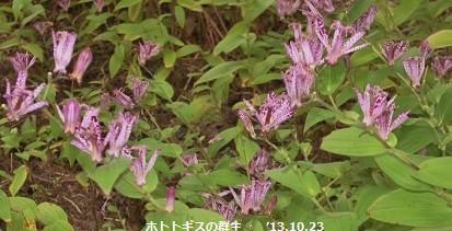 f:id:mikawakinta63:20131022235032j:image