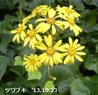 f:id:mikawakinta63:20131022235933j:image:right
