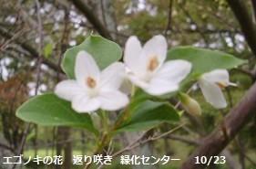 f:id:mikawakinta63:20131023001545j:image:left