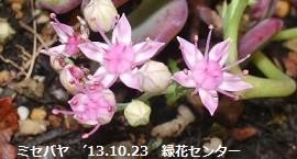 f:id:mikawakinta63:20131023004355j:image:right