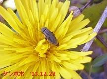f:id:mikawakinta63:20131221232605j:image:left
