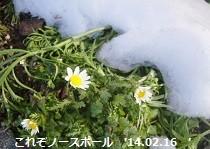 f:id:mikawakinta63:20140216000431j:image:left