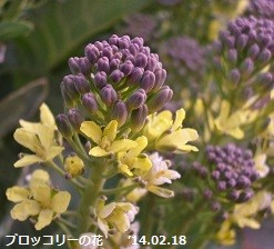 f:id:mikawakinta63:20140217215529j:image:right