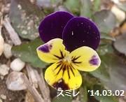 f:id:mikawakinta63:20140301000013j:image:right