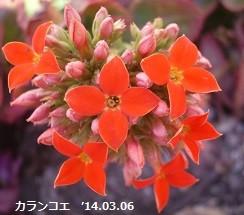 f:id:mikawakinta63:20140306031722j:image:right