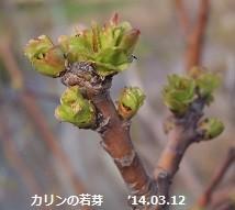 f:id:mikawakinta63:20140311213925j:image:right