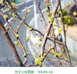 f:id:mikawakinta63:20140311214043j:image:left