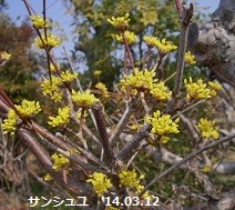 f:id:mikawakinta63:20140311234412j:image:right