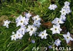 f:id:mikawakinta63:20140316050329j:image:left
