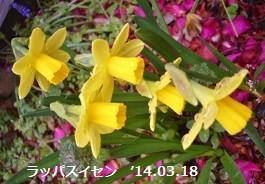 f:id:mikawakinta63:20140318031216j:image:right