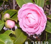 f:id:mikawakinta63:20140319064757j:image:right