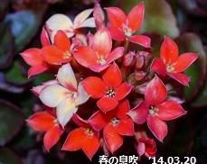 f:id:mikawakinta63:20140320020857j:image:right