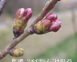 f:id:mikawakinta63:20140325030821j:image:left