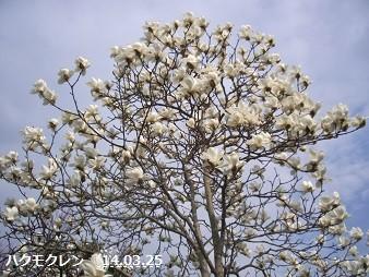 f:id:mikawakinta63:20140325050557j:image:left