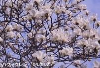 f:id:mikawakinta63:20140325050624j:image