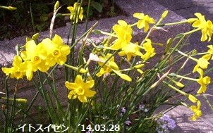 f:id:mikawakinta63:20140327024555j:image:left