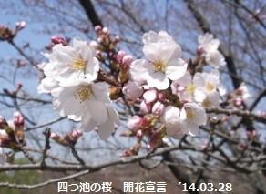 f:id:mikawakinta63:20140328003150j:image:right