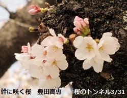 f:id:mikawakinta63:20140331133343j:image:right