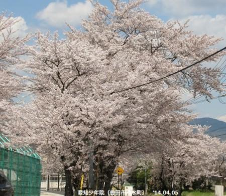 f:id:mikawakinta63:20140405124609j:image
