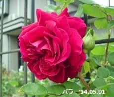 f:id:mikawakinta63:20140501014241j:image:right
