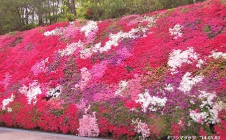 f:id:mikawakinta63:20140503103324j:image