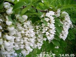 f:id:mikawakinta63:20140504220118j:image:left