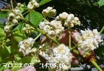 f:id:mikawakinta63:20140510010714j:image:left
