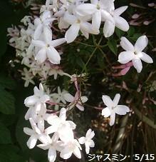f:id:mikawakinta63:20140511051105j:image:right