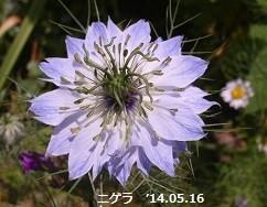 f:id:mikawakinta63:20140516020224j:image:right