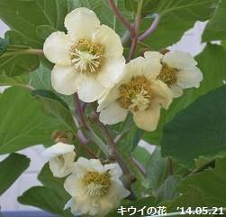 f:id:mikawakinta63:20140516224334j:image:left